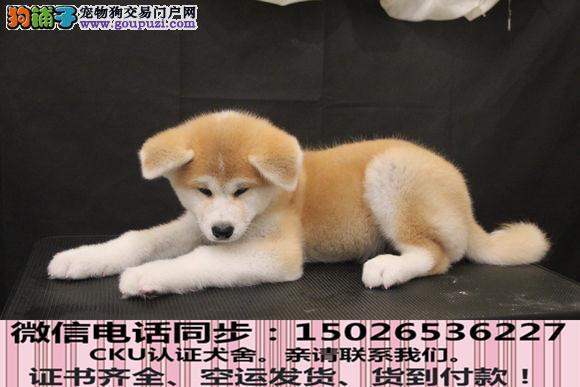 全国送货上门 秋田幼犬保健康保纯种签售后协议