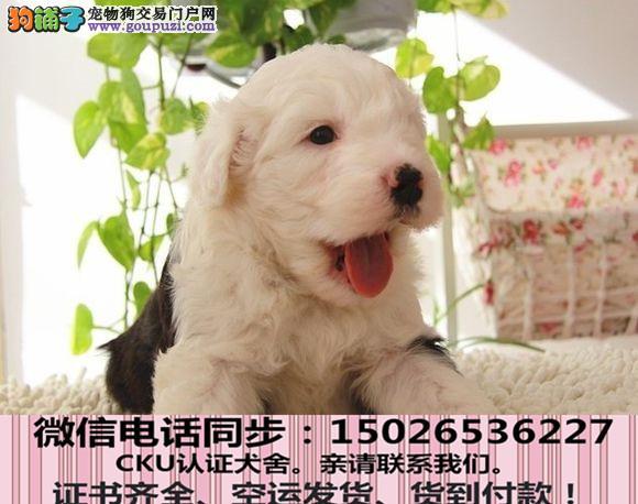 全国送货上门 古牧幼犬保健康保纯种签售后协议