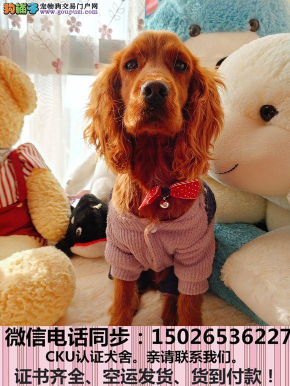 全国送货上门 可卡幼犬保健康保纯种签售后协议