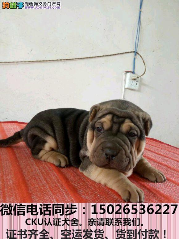 全国送货上门 沙皮幼犬保健康保纯种签售后协议