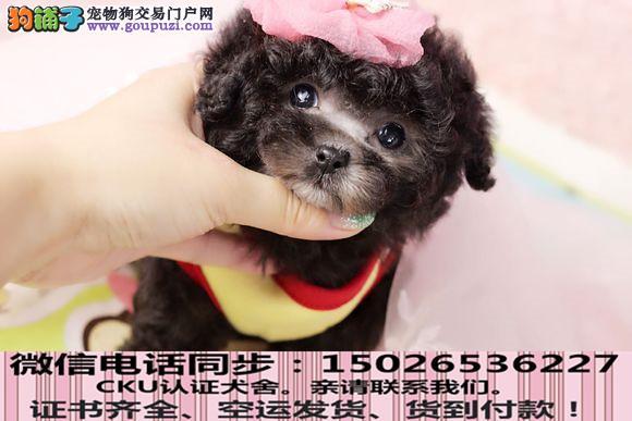 全国送货上门 茶杯幼犬保健康保纯种签售后协议