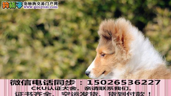 本地正规犬场出售纯种喜乐蒂包养活签协议