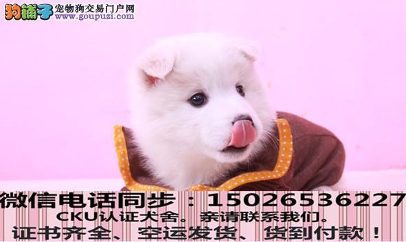 专业繁殖( 银狐犬)可来基地挑选。签协议保健