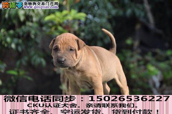 本地正规犬场出售纯种沙皮包养活签协议