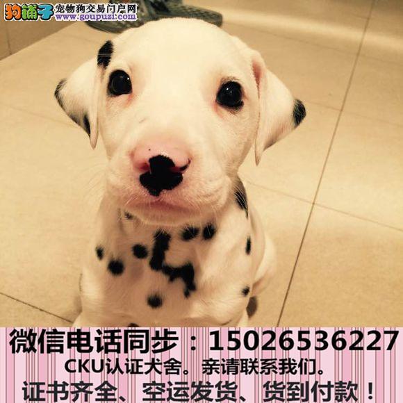 本地正规犬场出售纯种斑点狗包养活签协议