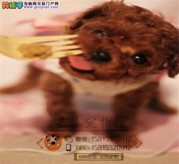 纯种韩系,小体玩具泰迪熊宝宝,可爱至极 购买包售后