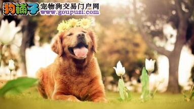 想养狗的点进来 教你如何挑选一只健康狗狗(二)