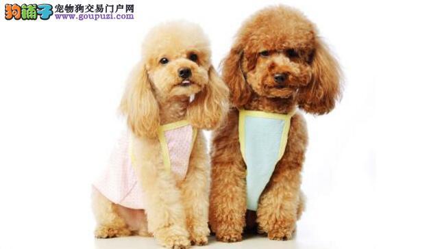 想养狗的点进来 教你如何挑选一只健康狗狗(一)