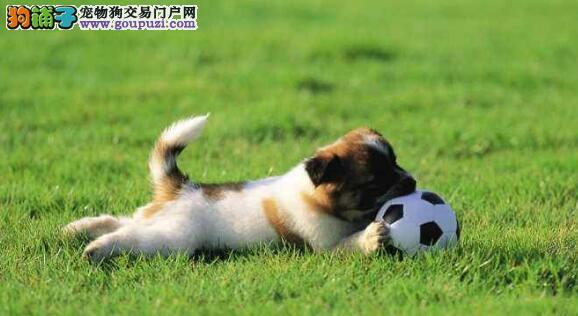 最好训练的4种宠物狗,你知道多少
