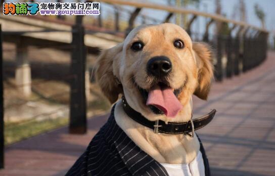 老年人养狗的好处以及挑选技巧