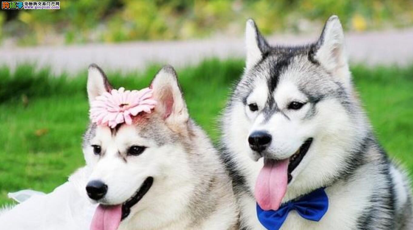 单身狗最适合养的几种狗