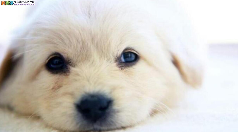 关于狗狗结扎,你知道多少?