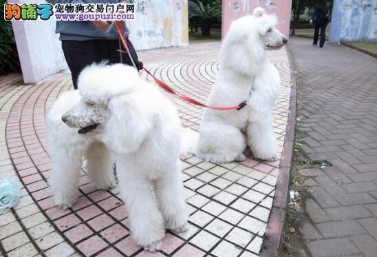 狗狗受伤怎么紧急处理