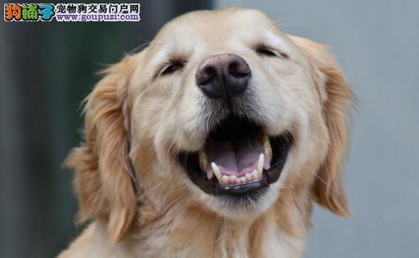 新手期应该如何养狗狗呢