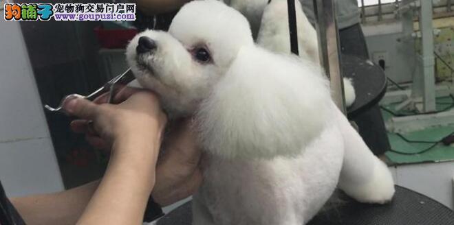 如何在家给狗狗最美容,小编给大家来支招