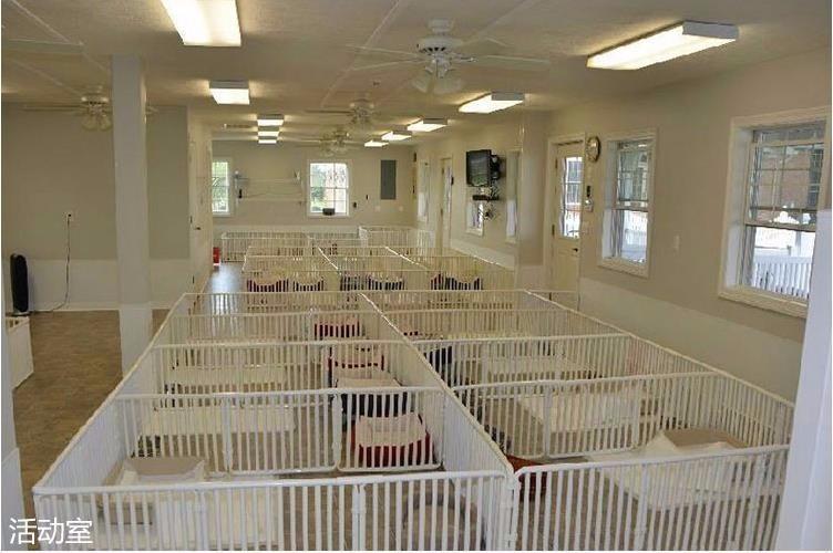 专业繁殖出售杜高.加纳利.比特等各种猛犬。
