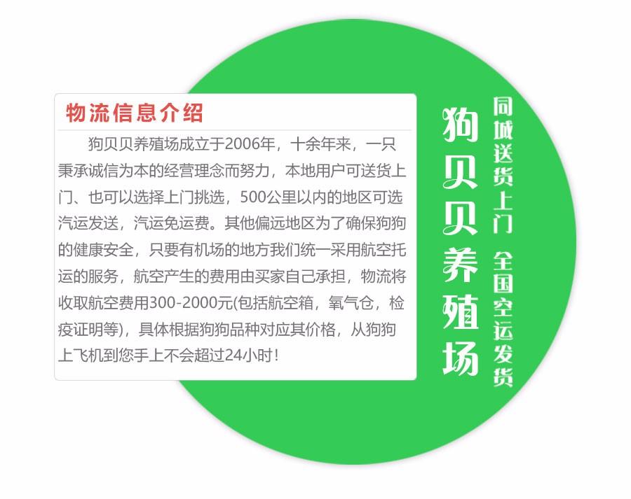 厂家直销纯种椒盐色雪纳瑞 成都地区最低价保品质
