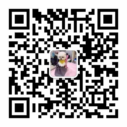 泰迪犬渭南最大的正规犬舍完美售后赛级品质血统保障5
