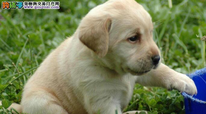 如何给狗狗进行美容护理
