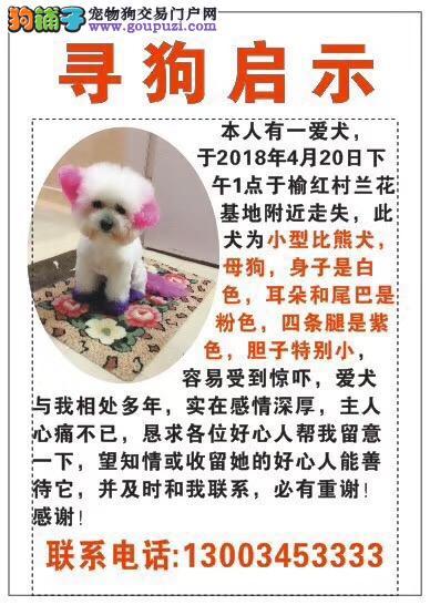 三亚市吉阳区榆亚路榆红村酬谢五千元寻找比熊