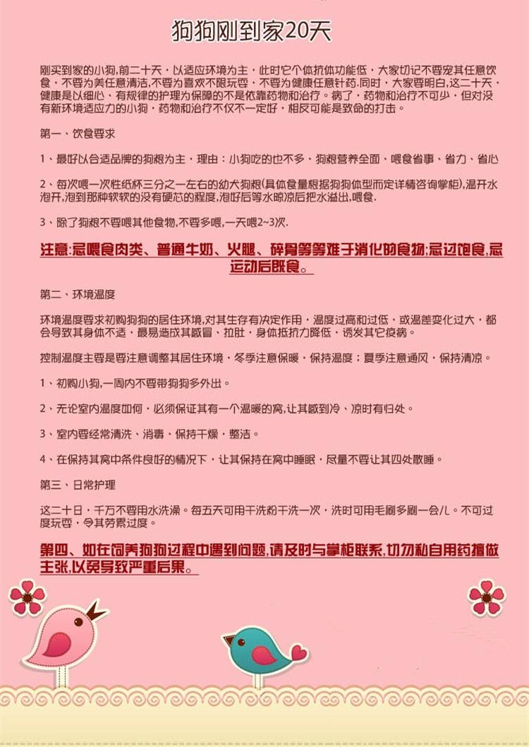 CKU犬舍认证出售高品质哈尔滨马尔济斯当日付款包邮11