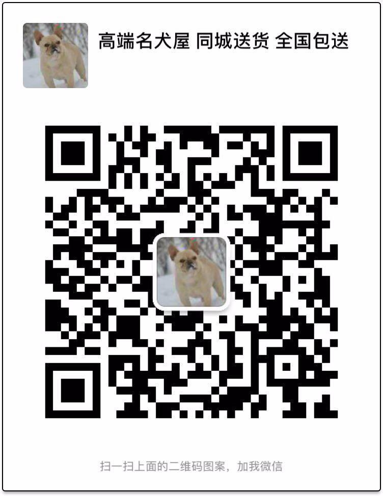 直销出售韩系血统泰迪犬 欢迎来武汉犬舍实地考察5