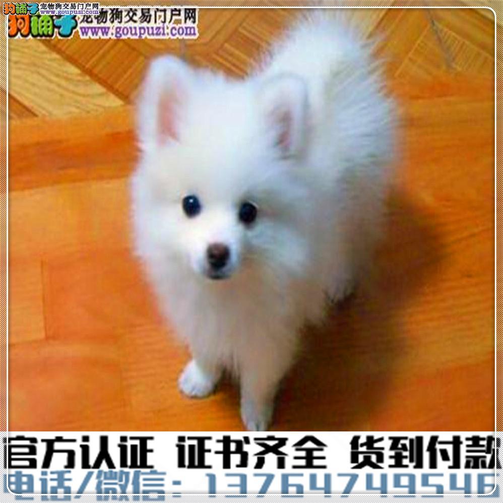 赛级银狐犬疫苗驱虫已做绝对信誉保证