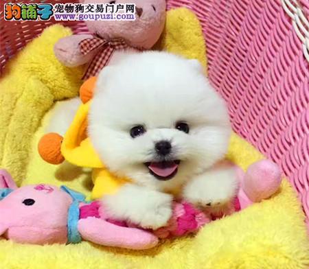 北京高端宠物培育中心精品网红俊介宝宝出窝啦