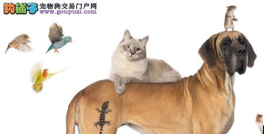 宠物成为新宠你知道什么是宠物吗