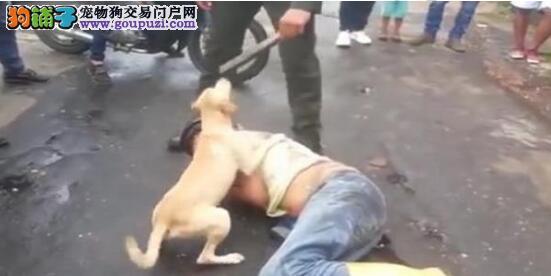 主人喝醉,狗狗守护身边不弃