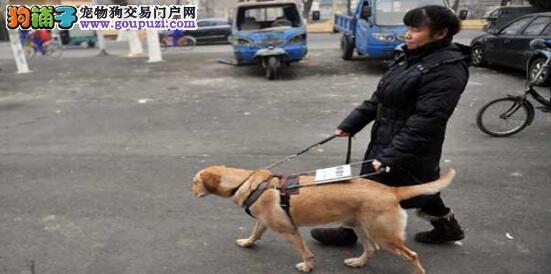 盲人歌手携导盲犬酒店被拒