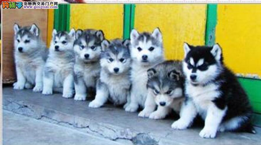 小区养宠物狗造成环境破坏,物业叫苦不迭