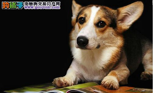 能买菜的狗狗-欢欢