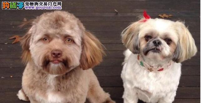 """长着""""人脸""""的一条狗狗在网上大火,不能盯着它的脸看"""