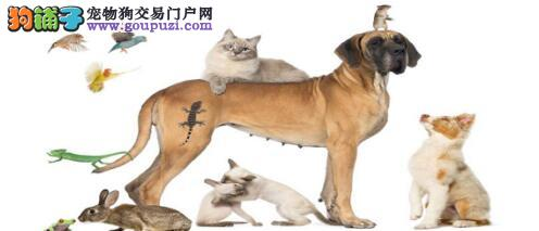 猫狗冤家通力合作