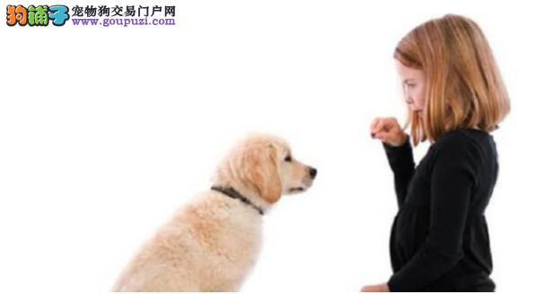"""如何让狗狗的变得更加的""""懂事""""?服从主人的管理?"""