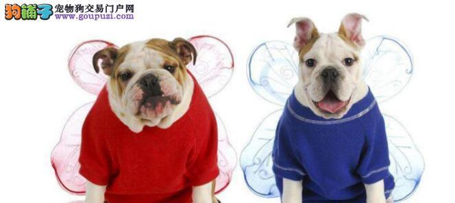 小狗在剃完毛的时候需要注意些什么?可以洗澡吗?