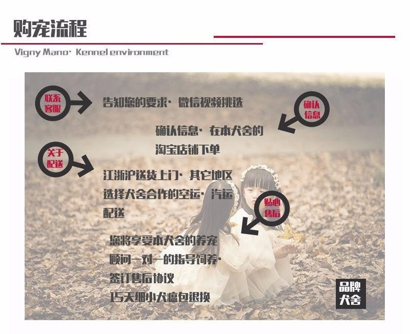 出售大丹犬幼犬 疫苗驱虫已做 专业信誉服务