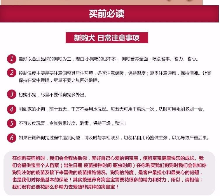 广州出售泰迪犬 纯种健康茶杯泰迪幼犬签协议可见父母7