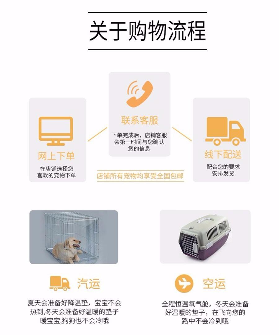 广州出售泰迪犬 纯种健康茶杯泰迪幼犬签协议可见父母10