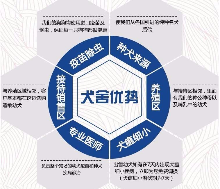 广州出售泰迪犬 纯种健康茶杯泰迪幼犬签协议可见父母14