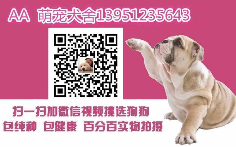 活泼可爱小巧可人的大连贵宾犬优惠出售 签订购犬协议5