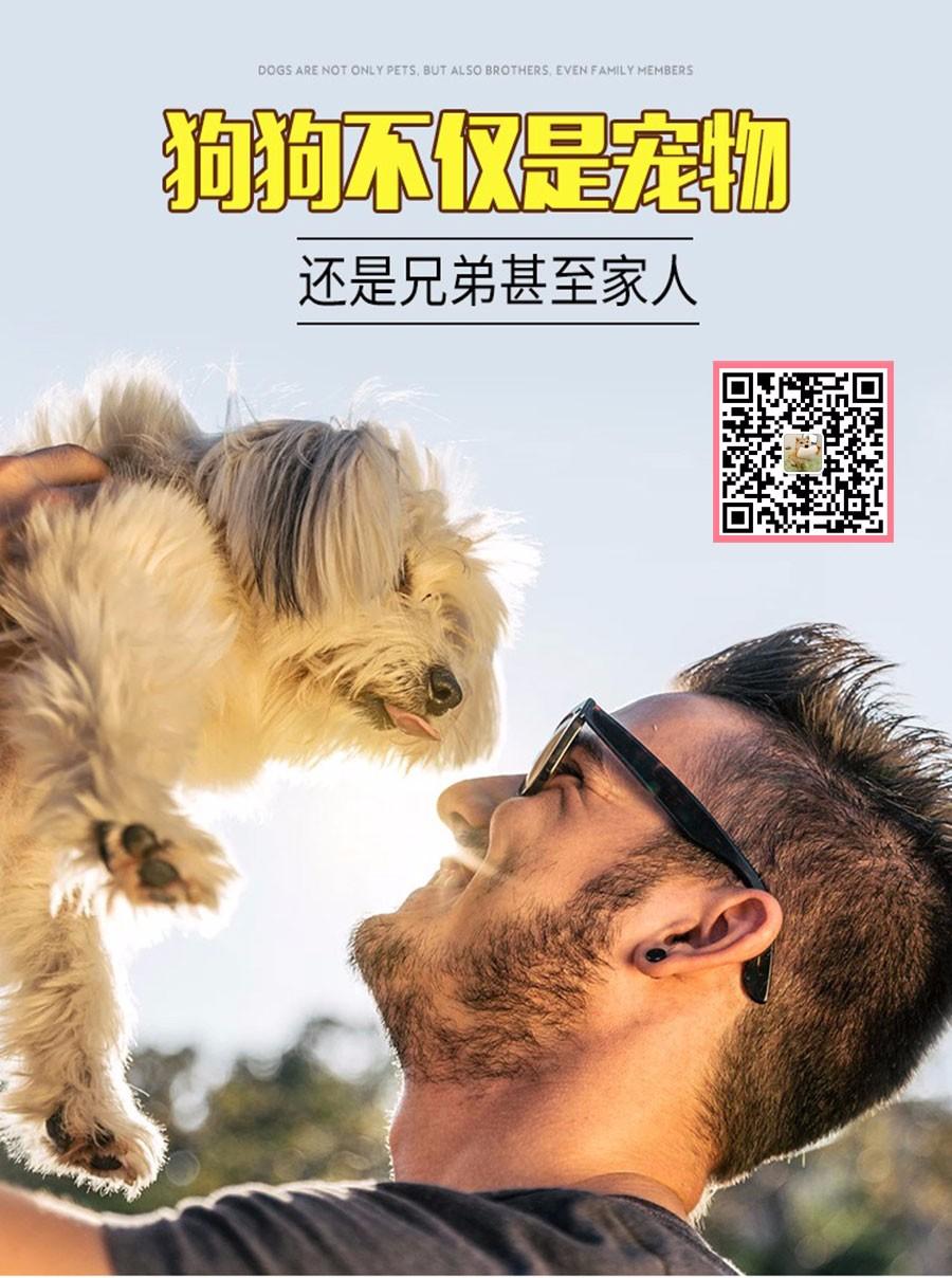 拉布拉多幼犬热销中、国际血统品相好、购犬可签协议5