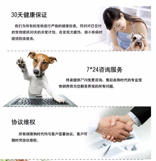 百分百健康纯种泰迪犬热卖中签订协议终身质保