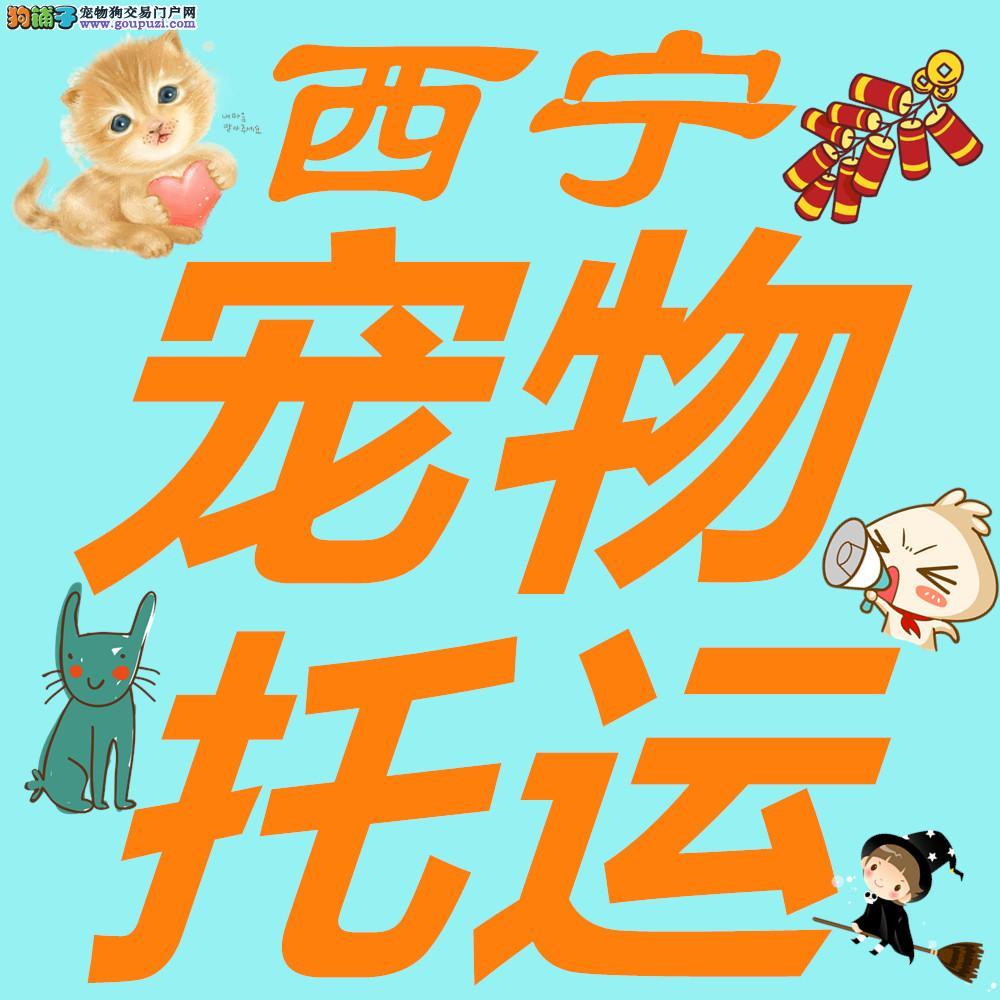 西宁宠物托运全国安全放心快捷找帮宠帮宠物托运公司