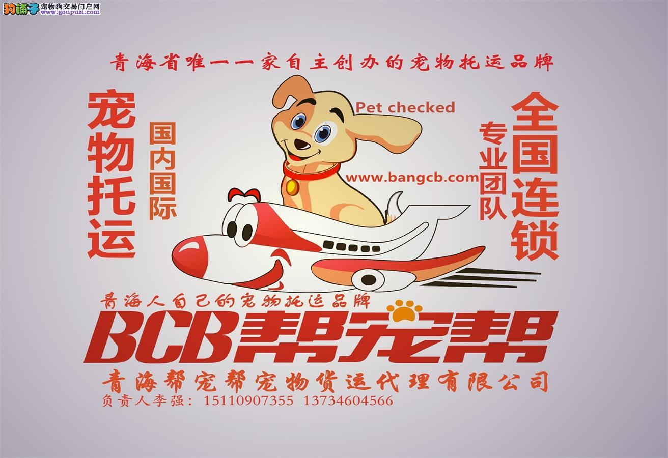 西宁宠物托运全国哪家好?青海帮宠帮宠物托运公司