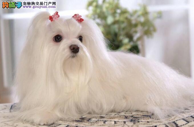 想要在家养个小型狗狗,哪些品种比较适合呢