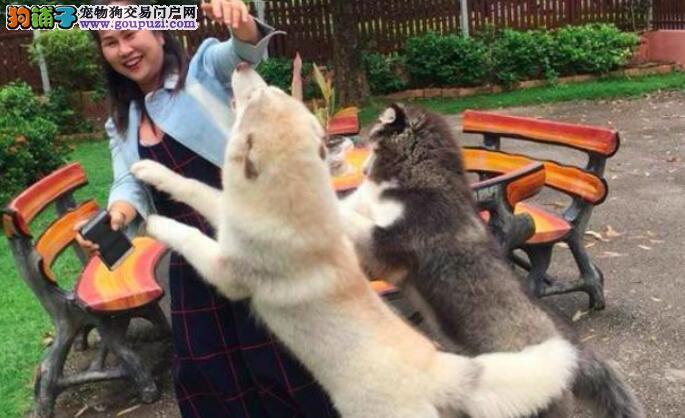 当网友度假回来家里面的两只狗狗高兴的给主人身上爬