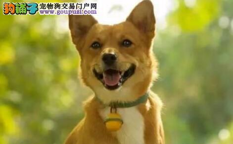 如何教狗狗去厕所,训练狗狗拉屎的好习惯