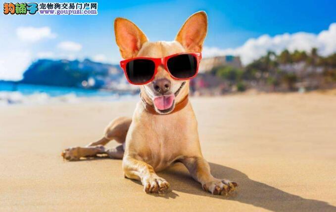 夏天养狗要注意,这几件事情千万不要做,谨防狗狗中暑